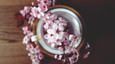 THE SIGNIFICANCES OF JAPAN'S CHERRY BLOSSOMS: PART THREE